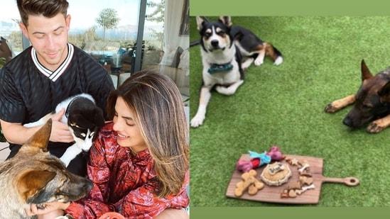 Priyanka Chopra and Nick Jonas' dog Gino turned two on Monday.
