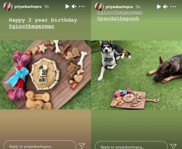 Priyanka Chopra shares pics of her dogs.