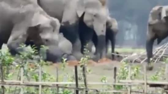 The image shows the mama elephant trying to stop the fall of its baby.(Jukin Media)