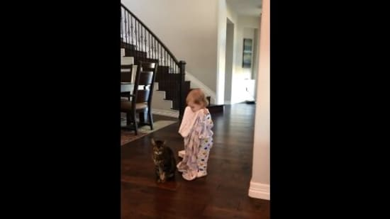 The image shows the kid standing behind the cat with a blanket.(Reddit/@unnaturalorder)
