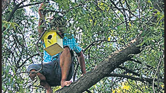 A resident of Life Republic Society, Marunji, Hinjewadi places a bird house in a tree. (HT)