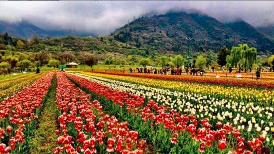 J&K Tourism dept promotes destination festivals, trekking to attract tourists(Instagram/@travelwithsowmya_natz)