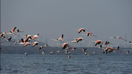 Thane Creek Flamingo Sanctuary. An ESZ is a buffer area created around a wildlife sanctuary or national park to reduce developmental pressures. The Centre has recommended final notice. (HT PHOTO)