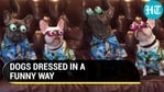 DOGS DRESSED IN A FUNNY WAY