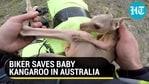 BIKER SAVES BABY KANGAROO IN AUSTRALIA
