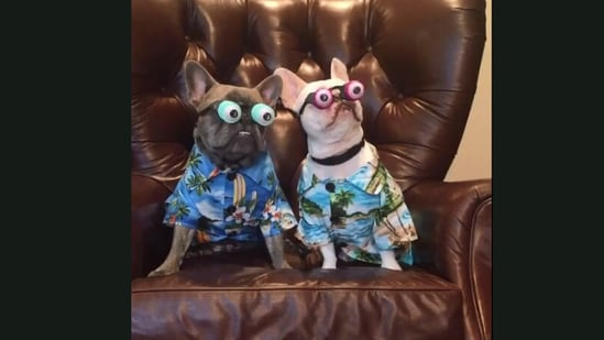 The image is taken from the video showing the dogs dressed in a funny way.(Jukin Media)