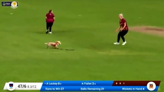 The image shows the dog running around with the ball.(Twitter/@IrishWomensCric)