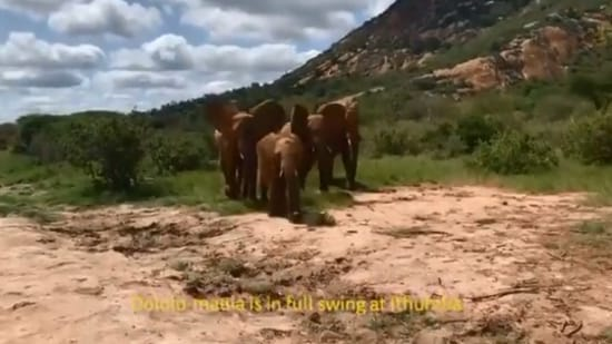 The image shows a herd of elephant.