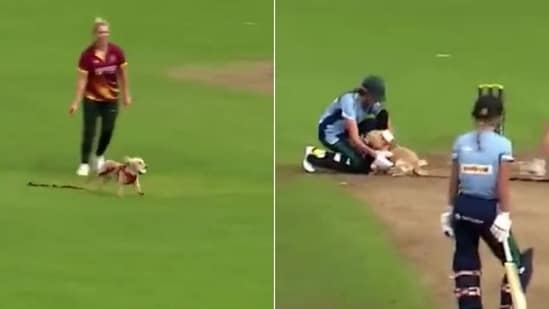 Dog steals the ball during a cricket match(HT Collage)