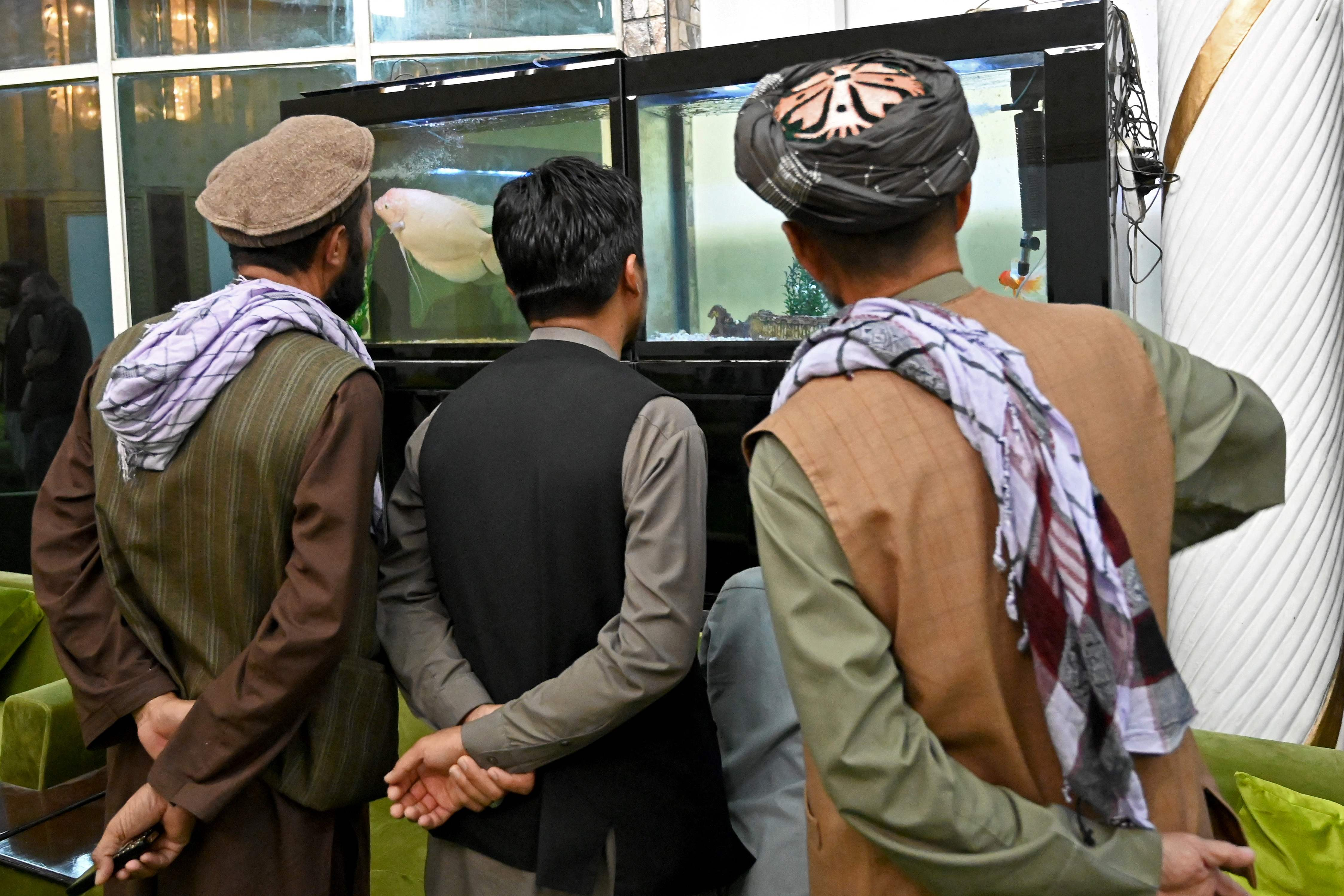 Taliban fighters look at an aquarium inside Dostum's house (AFP)