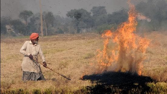 A farmer burning paddy stubble at a village in Punjab's Patiala district. (HT photo)