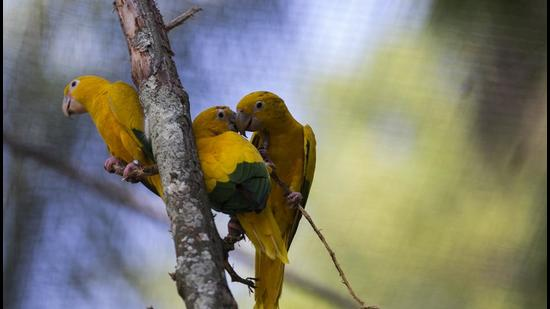 The aviary is coming up at City Forest near Sukhna Lake in Chandigarh and will house over 40 rare species of exotic birds. (AP/Representative image)