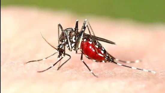 In Indore, a door-to-door sample collection drive is being done to check the presence of larva of the Aedes mosquito. (File photo)