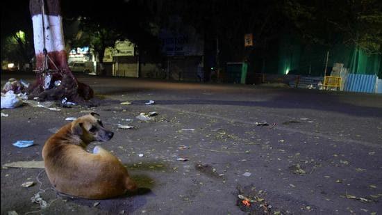 Around 60 dogs were killed at Hunasekatte village in Bhadravati taluk of Shivamogga district, around 300km from Bengaluru, police said.