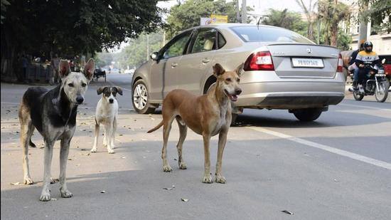 On September 12, the Ludhiana MC was notified about the presence of a rabid dog near the cremation ground in the civil lines area, which had bitten a dozen people. (HT File)