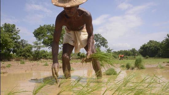 Agriculture needs an honest political conversation (Arabinda Mahapatra)
