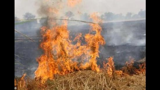 Stubble burning cases were largely registered in west UP districts in the wake of increasing air pollution (HT File Photo)