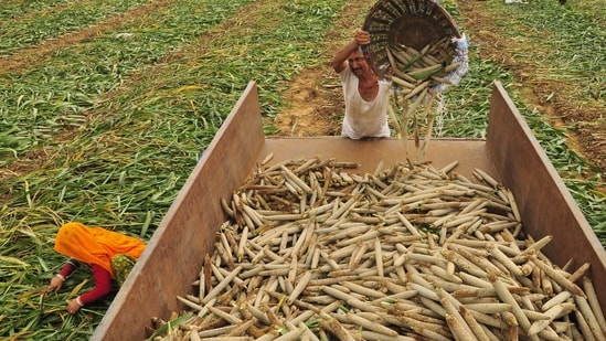 PM Modi is betting the private sector can help farmers boost yields with apps and tools built from information such as crop output, soil quality and land holdings.(HT File)