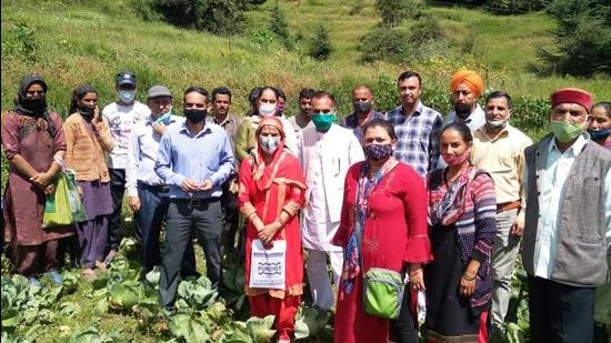 A team of scientists with farmers after examining the cabbage crop that has been hit by a fungal disease in the Chhota Bhangal valley of Kangra district earlier this week. (HT Photo)