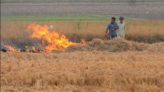 Last year, farm fires in Haryana's paddy fields dipped. There was an 11% reduction in stubble burning cases. (HT Photo)
