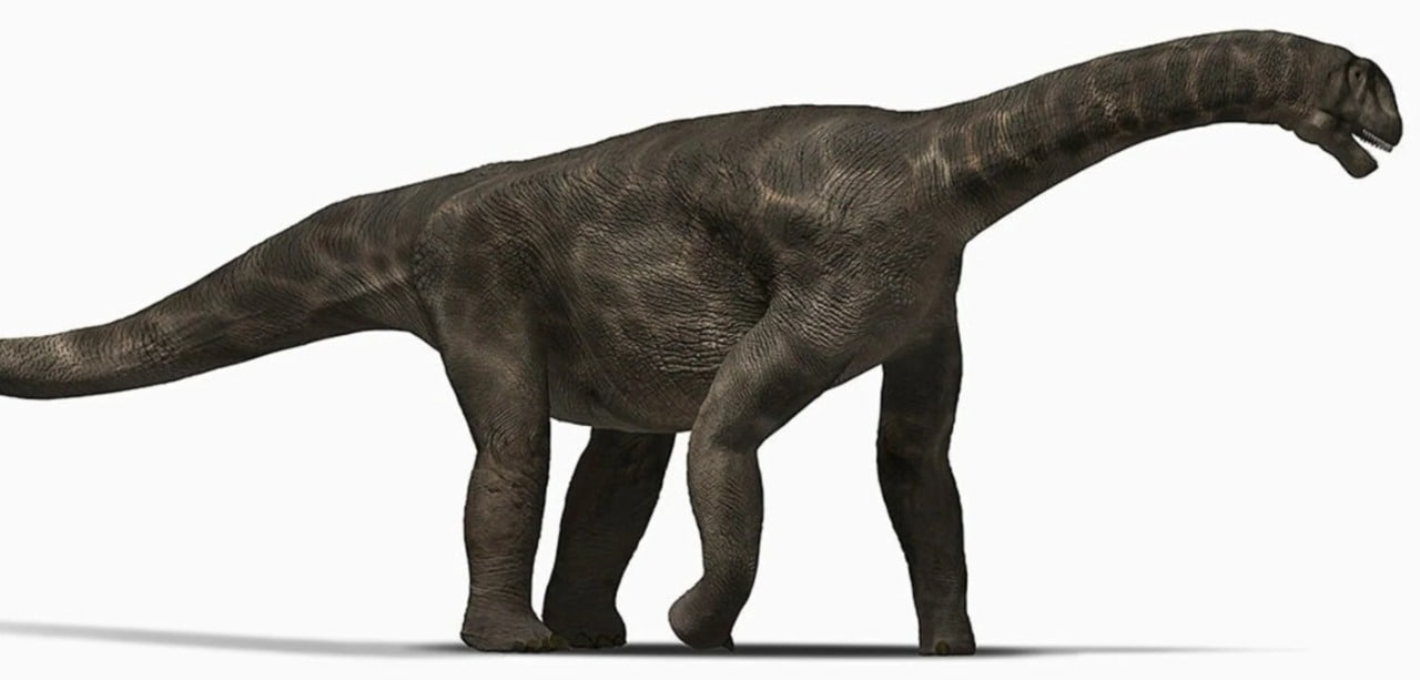 A representation of a sauropod. (HT Illustration)