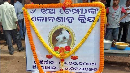 The owner of the dog in Odisha's Bhadrak district has put up its framed photograph in front of his fast food shop (HT Photo)