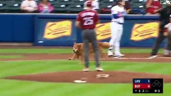 The image shows a dog named Rookie interrupting a baseball match.(Twitter/@MiLB)