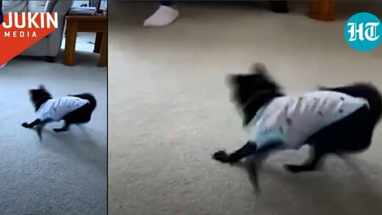 The image is taken from the video involving the dog and laser light.(Jukin Media)