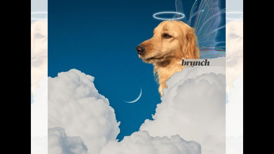 For most of us, the constant online updates of proud pet people are a portal to another world (Parth Garg)