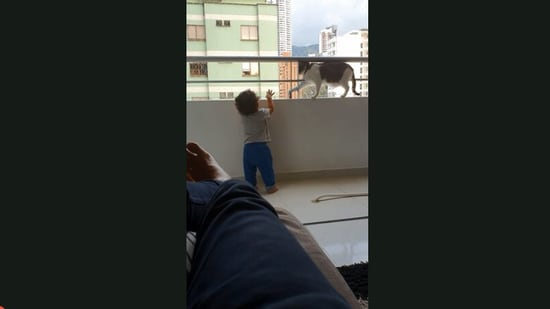 The video shows the cat protecting the kid.(Jukin Media)