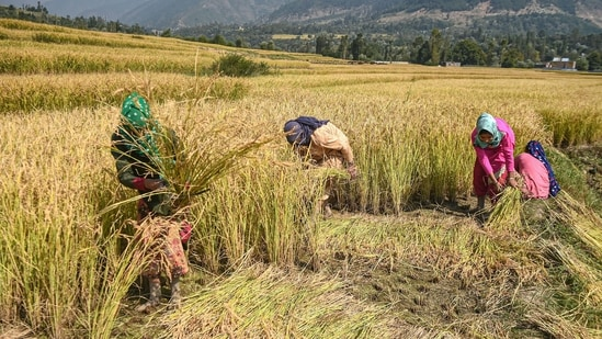 Business of farming: HT's analysis of SAS data shows that one in three farmers in India is unhappy with the prices received on selling the crop.(PTI)