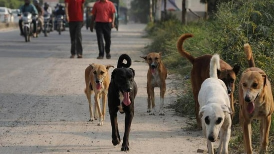 World Rabies Day was observed for the first time on September 28, 2007.