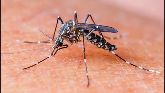 Chikungunya is caused by the chikungunya virus (CHIKV). In addition to excruciating joint pain, fever and rashes, the infection also causes joint swelling, headache, nausea and fatigue. Its pain-related symptoms are similar to rheumatoid arthritis. (HT FILE)