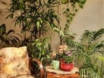 According to Vastu-Shashtra, there are certain rules to be followed when setting up a garden at your home.