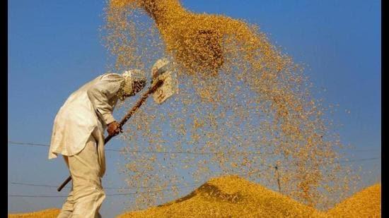 Centre postpones paddy buying in Punjab, Haryana till Oct 11 due to rains -  Hindustan Times