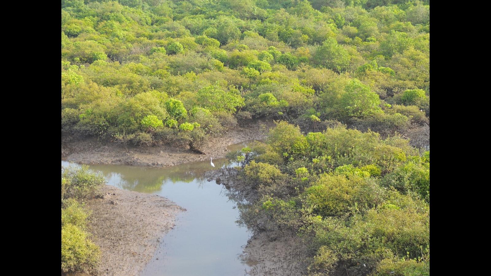 Plastic dominates marine debris in city mangroves: Study