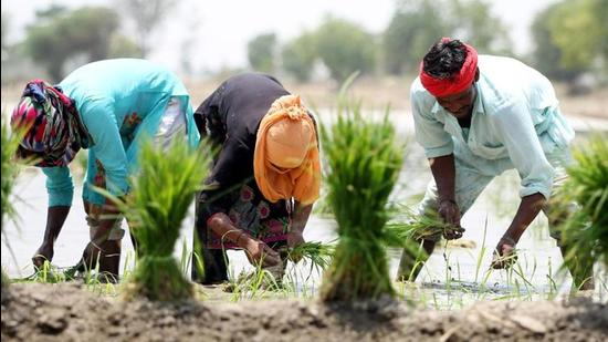 In contrast to Punjab, farm incomes in states such as Bihar and Uttarakhand grew much faster at 13.3% and 19.3% in the corresponding period, albeit over a low base. (HT PHOTO.)