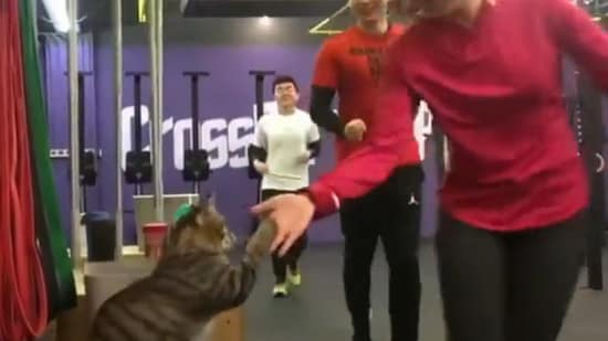 The cat perched atop a seat in the gym happily high-fives each human in the video. Screengrab