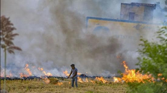 Stubble burning is considered one of the major contributors to air pollution and smoky haze in Delhi. (PTI Photo/File/Representative use)