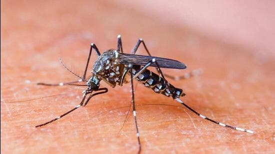 In the last 48 hours, 19 new cases of dengue have been detected in the Ludhiana district (Representative photo)