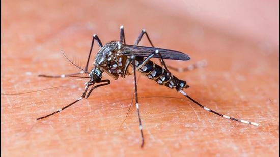 The Mohali district health department has intensified its anti-larvae checking to curb the spread of dengue with a total of 13 anti-dengue teams. (HT FILE PHOTO)
