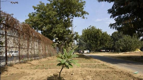 Around 500,000 saplings were planted across the district this monsoon, the district administration said on Monday. (HT Archive)