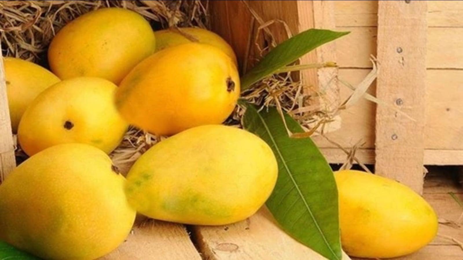 CISH helps Rataul mangoes get GI tag