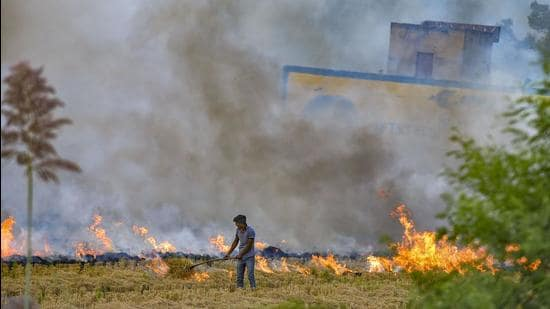 On October 13, a total of 132 events were captured by the satellite in Punjab. On the same day in 2019, 117 active fire events were captured, while there were 240 active fire events in the state in 2020. (Representational image/PTI File)