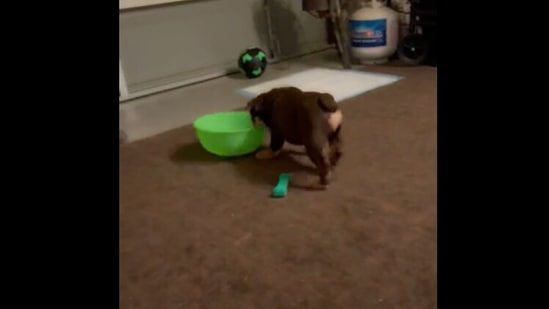 Dog plays around with a green bowl. Screengrab