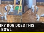 HUNGRY DOG DOES THIS WITH BOWL