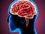 Study explores hidden territory of human brain. (Representational image)(Shutterstock)