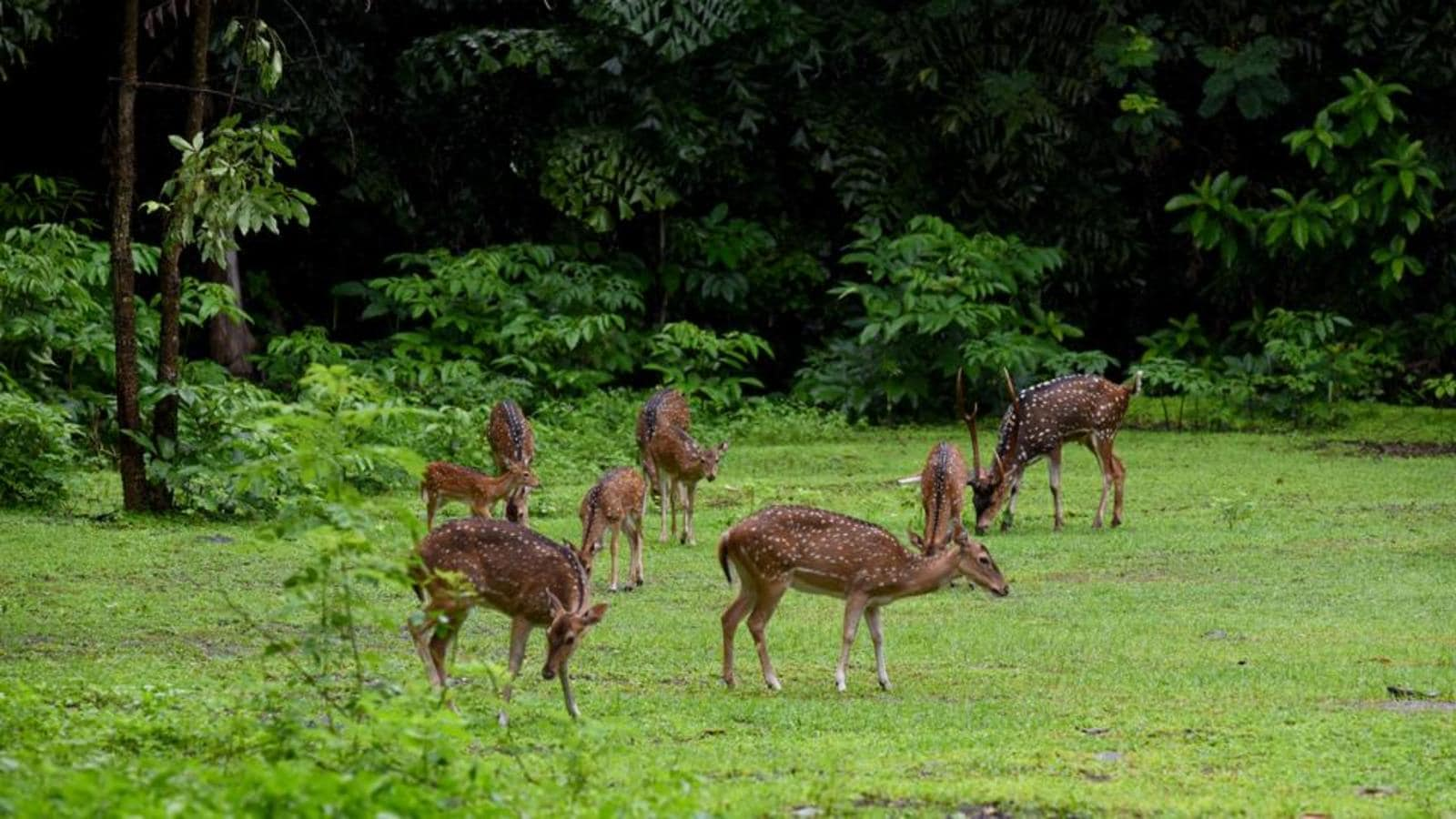 Mumbai's SGNP to get wildlife forensic laboratory by March 2022