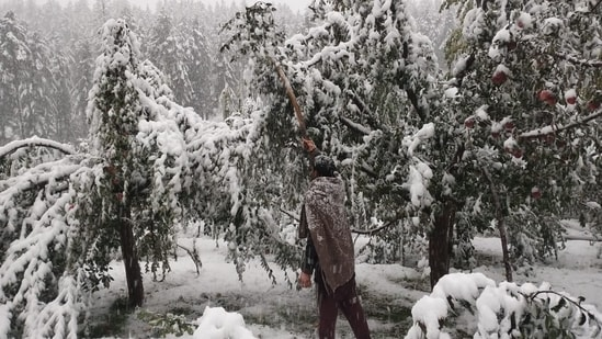 As per the visuals, farmers felt a bit worried as they feared that their crops might get damaged. The untimely snowfall in Kashmir has affected apple orchards in Padpawan village.(HT Photo/Waseem Andrabi)