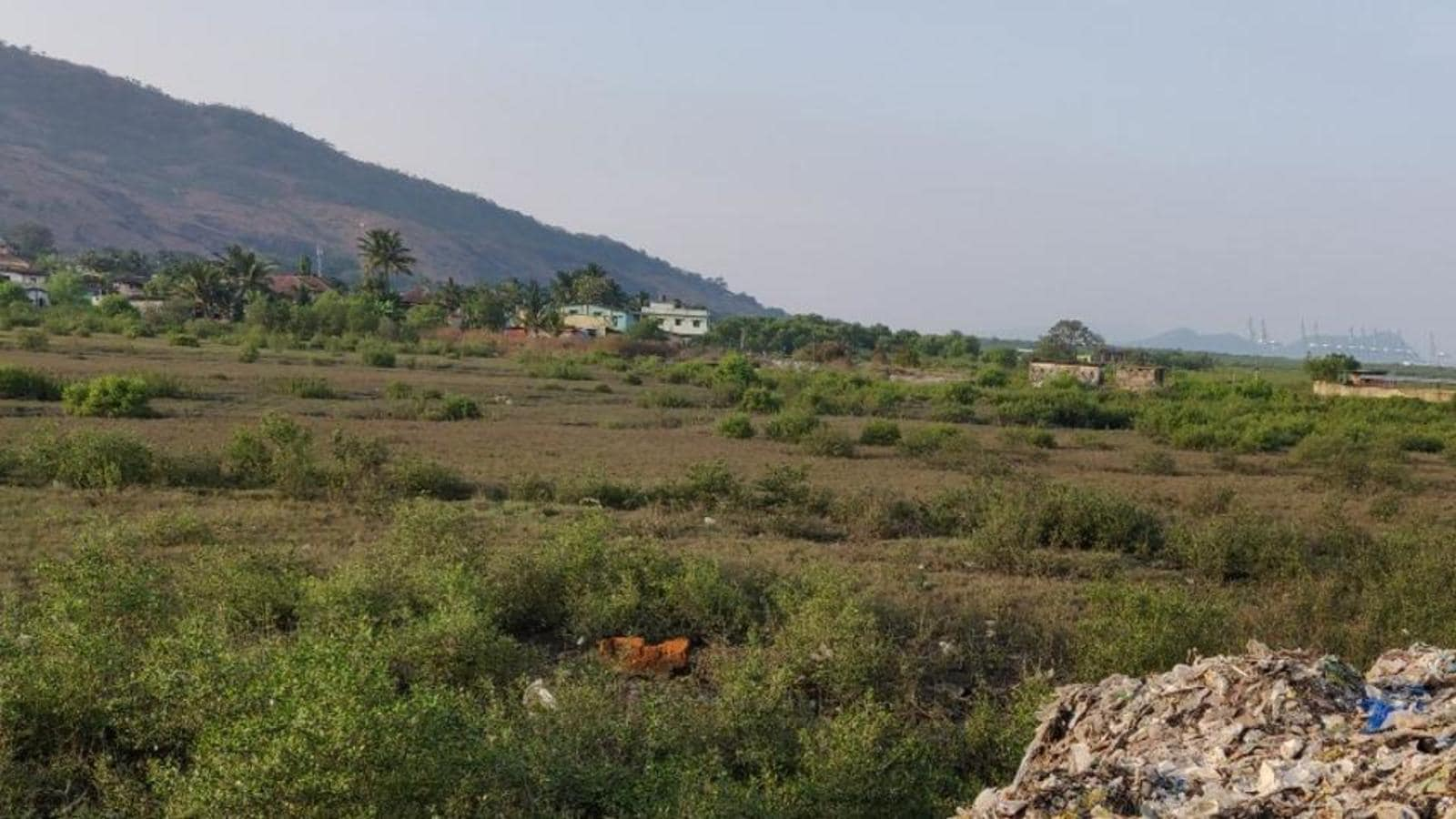 JNPT scraps mangrove park proposal in Uran, to hand over land to forest department